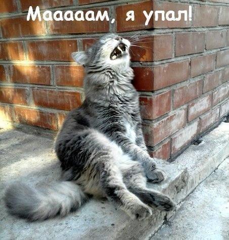 amV7zmkgCHc - — Отношения это не только радость...