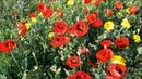 Музыка для души. Вальс цветов. Чайковский / The Waltz of Flowers by Tchaikovsky