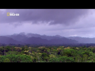Дикая природа Амазонки (2010) Колыбель жизни