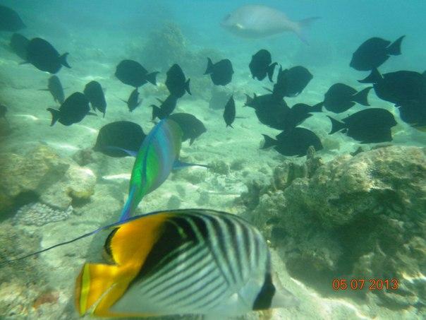 Тема club el faraana reef 4 шарм египет