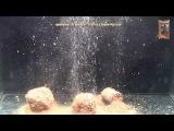 Прикормка GF Salapin Плотва Специи-Мотыль