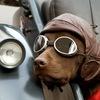 ZooTaxi24 Профессиональная перевозка животных