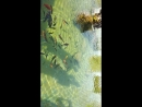 Занги Ата, красивые рыбы