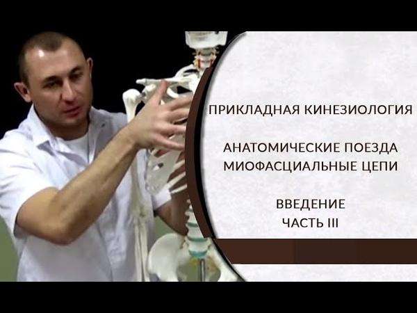 Прикладная кинезиология. Анатомические поезда. Миофасциальные цепи. Циванюк А. В. Часть III