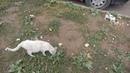 Котёнок Майкудука кушает хлеб