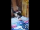 Когда кошка тащится от носка!