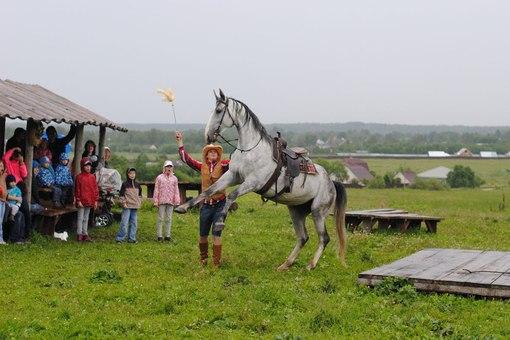 Отдых в Токсово|Лошади