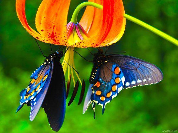 Renklerle doğa ve hayvanlar