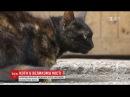 Частина екосистеми: Київрада заборонила виганяти котів із підвалів будинків