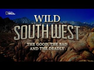 Прекрасная Америка: Дикий Юго-Запад. Хороший, плохой и смертельно опасный / Wild Southwest. The Good, the Bad and the Deadly (20