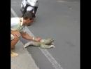 Ленивец переходит дорогу