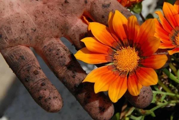 Как начисто отмыть руки после долгой работы в огороде