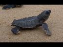 Saving Sea Turtles on World Sea Turtle Day!
