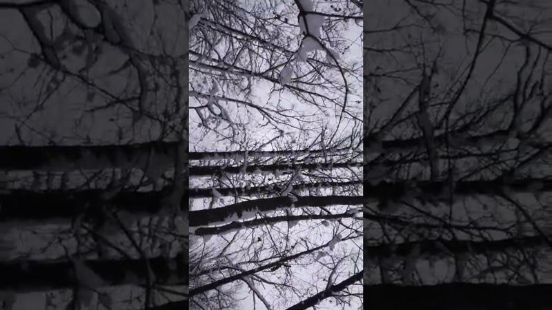 Миро Творец. 319. Завышенное ЭГО. Загон в иллюзии 14.01.19