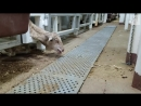 Sheep held in horrific conditions on Australian export ship