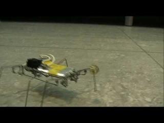 "Робот таракан из скрепок  ""Жёлтый По "" ."