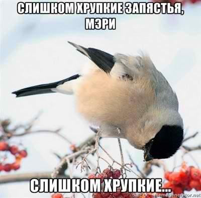 http://cs405329.userapi.com/v405329993/8e5a/ZanI8RCZ8ms.jpg