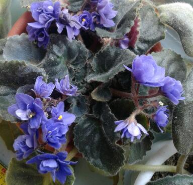 Цветы у Ликки HoYSFSYv5-Y