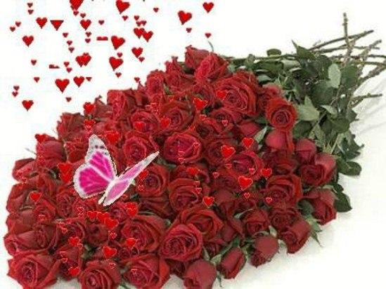 фото много цветов:
