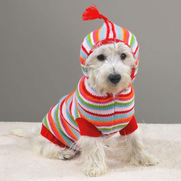 Вязание для маленьких собак своими руками