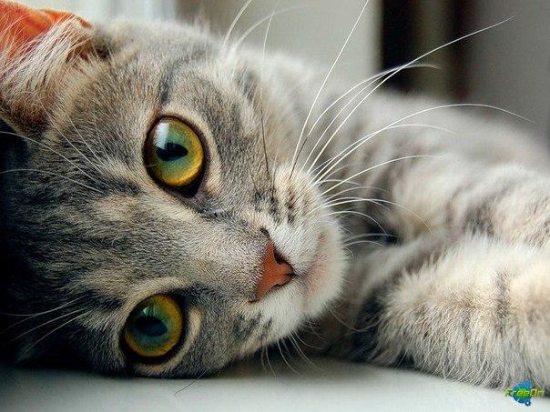 """Взгрустнулось. в свежие.   """"Про котэ """" - прикольные фото с котами."""