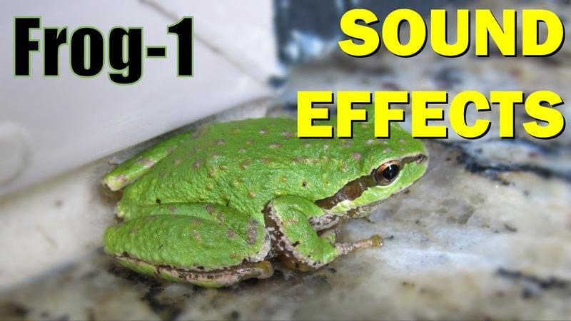 Frog Sound 1 Sound Effects