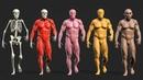 ZIVA VFX Realistic Character Setup Breakdown