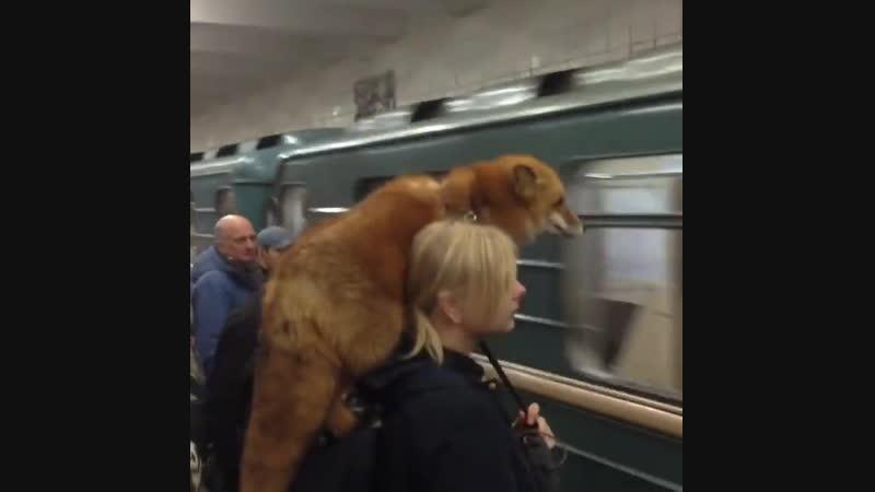 РАЗРЯДКА НАПРЯЖЕННОСТИ: Ничего необычного. Бывает и медведи по улицам ходят.