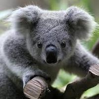Koala Angryfat, 14 февраля , Москва, id227636604