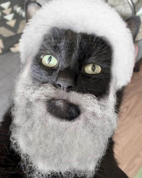 Морган Фриман кошачья версия????????????