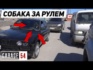 ЧТО? 😨 СОБАКА ЗА РУЛЕМ BMW ЕДЕТ по ГОРОДУ!