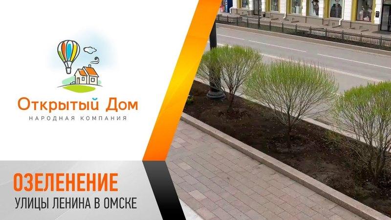 Озеленение улицы Ленина в Омске вблизи офиса Открытого Дома