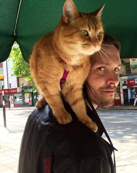 Сайт джеймса и кота боба