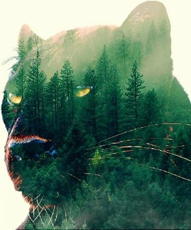 """真理愛/Maria on Instagram: """"真理愛の世界 森林 森林浴 森 山 樹海 自然 写真の奏でる私の世界 写真で伝えたい私の世界 豹 🐆 ねこ部 ねこすたぐらむ ねこさん 猫カフェ 猫好きな人と繋がりたい cool animallovers ..."""