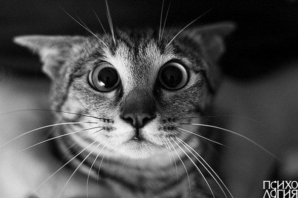 Шизофрения — Кошка говорит