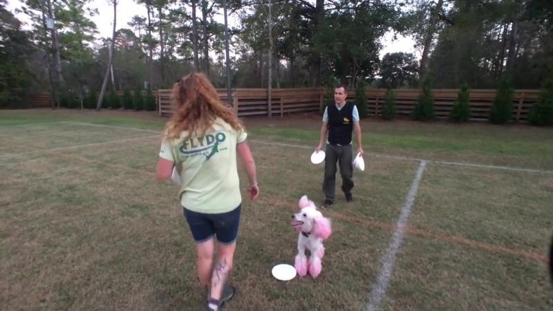 Poodle Pairs Practice