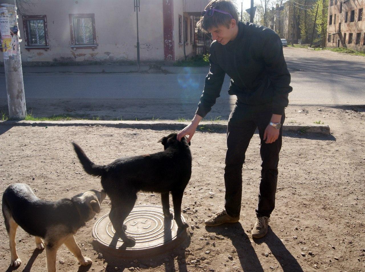 Никита и собаки
