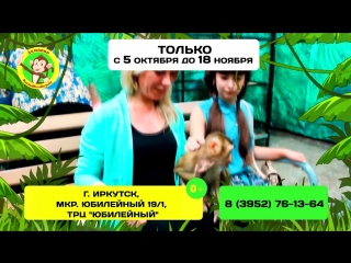 Выставка обезьян Лимпопо в Иркутске