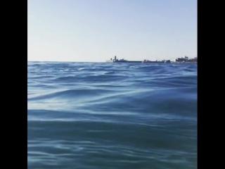 Утро и дельфины 🐬