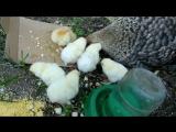 Презентация Домашние животные и их детеныши