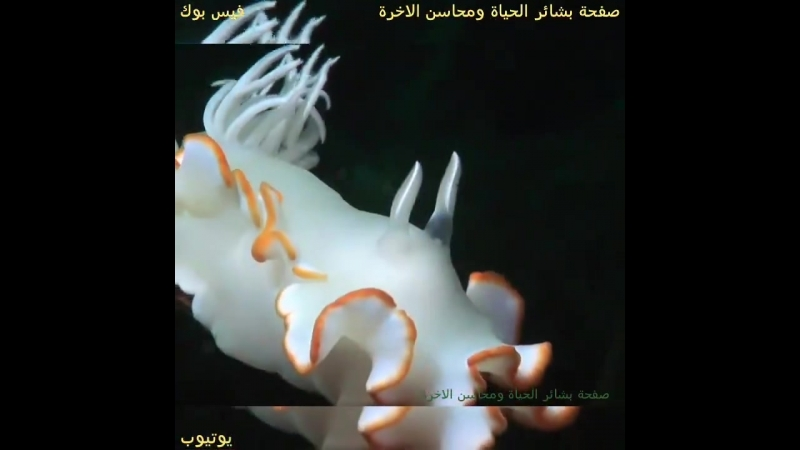 Космос Красного моря... Шарм эль шейх, Египет