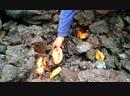 Горячие пирожки на лавовом потоке Толбачика