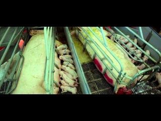 отрывок из Самсара фильма Рона Фрике (Чрезмерное потребление)