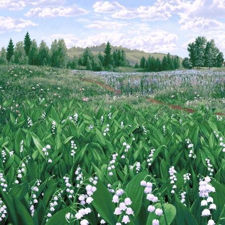 ландышами фото с поля