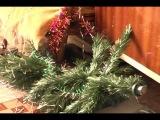 кошка и елка.avi