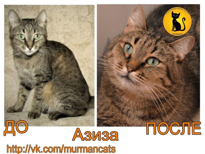 До и после. Азиза