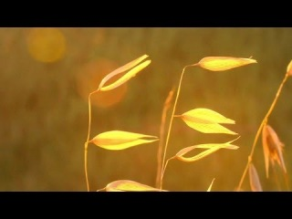 Relaxing Instrumental Music: soft, studying, work, think music - relaxdaily N°074