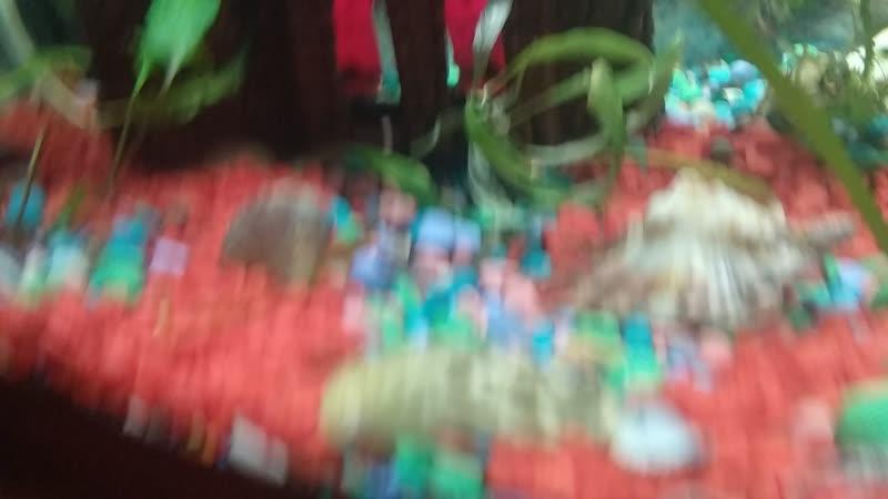 Наш аквариум пополнение рыбок Добавили ещё рыбок Данил голубеньких и малиновых и подсилили барбусов По моему получилось не пло