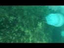 Теперь я Open water diver