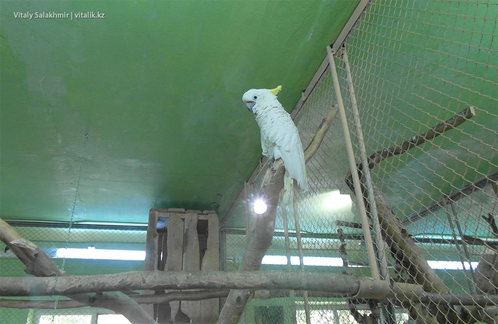 Белый попугай, птичий дом, зоопарк Алматы